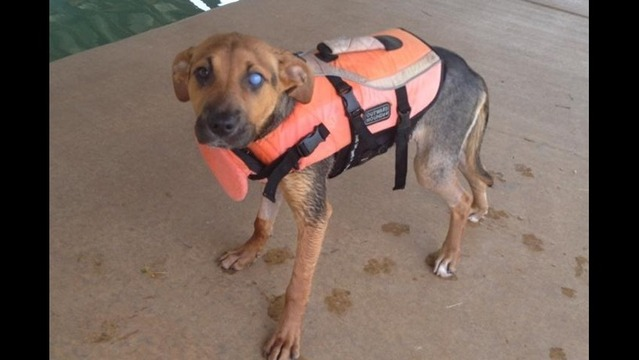 Dog Found In Tornado Rubble Looking for Forever Home