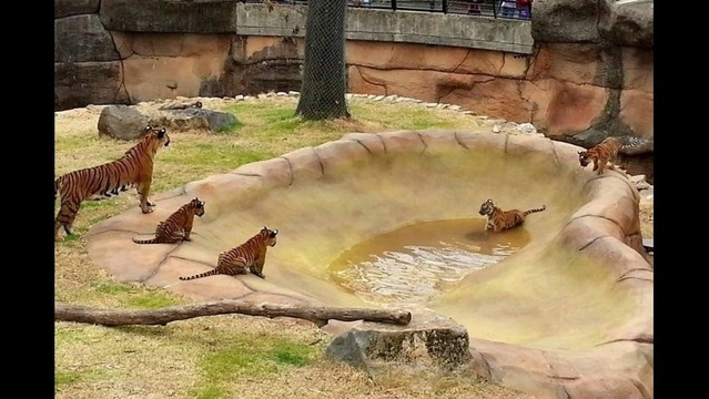 Hiland Dairy Dollar Day at Little Rock Zoo July 12