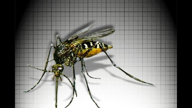 Summer Rain Increases Mosquito Count