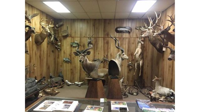 Taxidermists, AGFC Partner to Track Chronic Wasting Disease in Deer