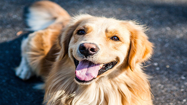 NLR Friends of Animals to Host