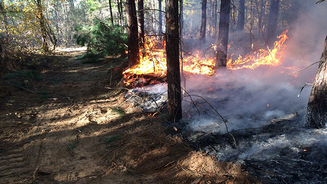 AR Wildfires Burn 1,805 Acres Over Holiday Weekend
