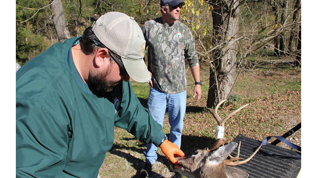 Biological Samples Reveal 70 New Cases of CWD, No New Counties Affected