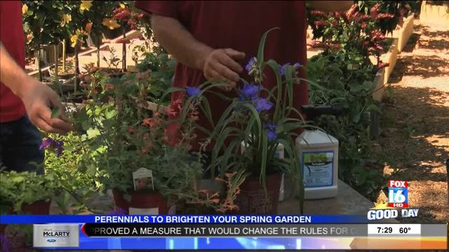 The Good Earth Garden Center: Perennials For Your Spring Garden