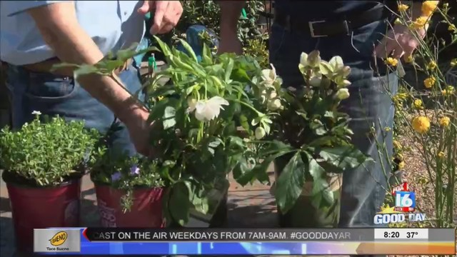 The Good Earth Garden Center: Flowers That Bloom In Early Spring