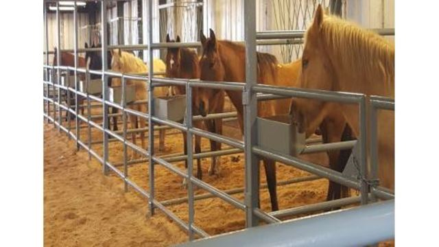 ADC to Host Annual Horse Auction this Weekend