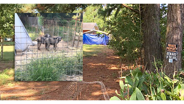 Report: Remains of 500 Dogs Found on Drew County Property