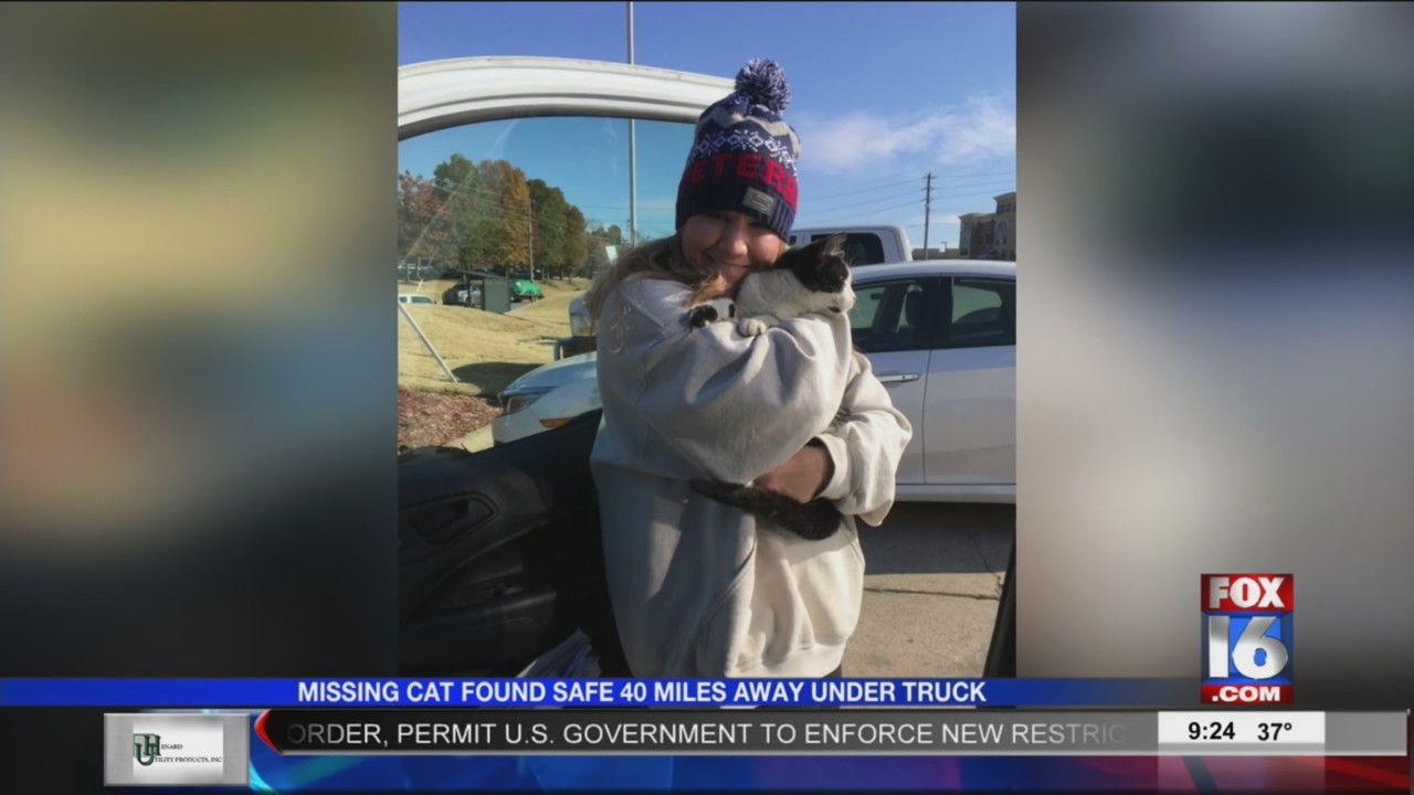Missing Faulkner County Cat is Found Under Repair Man's Truck in Little Rock