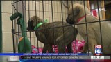 Puppies Rescued After Being Tossed From Car Along Beebe Highway