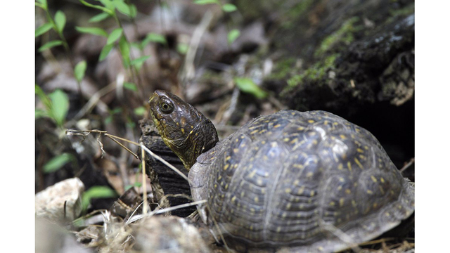 Dozens of turtles rescued from AR sewage plant